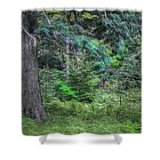 Cedar Along The Trail Of Cedars Glacier National Park  Shower Curtain
