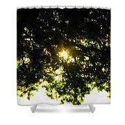 Cedar Filtered Sun Shower Curtain