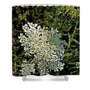 Cedar Flower One Shower Curtain