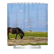 Cedar Island Wild Mustangs 48 Shower Curtain