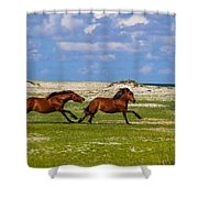 Cedar Island Wild Mustangs 51 Shower Curtain