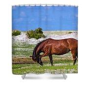 Cedar Island Wild Mustangs 59 Shower Curtain