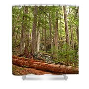 Cedar Logs At Garibaldi Shower Curtain