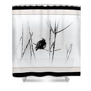 Cedar Waxwing - Black And White  Shower Curtain
