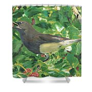 Cedar Waxwing Eating Mulberry Shower Curtain