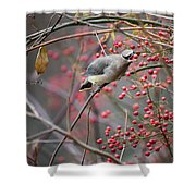 Cedar Waxwing Feeding Shower Curtain