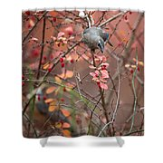 Cedar Waxwing Foraging Shower Curtain