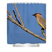 Cedar Waxwing Shower Curtain