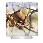 Cedar Waxwing - Img_0010-7x5 Shower Curtain