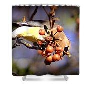 Cedar Waxwing - Img_9760-004 Shower Curtain