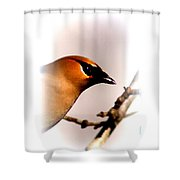 Cedar Waxwing - Img_9833-004 Shower Curtain