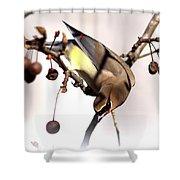 Cedar Waxwing - Img_9835-7x5 Shower Curtain