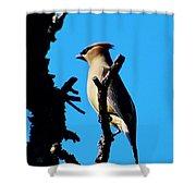 Cedar Waxwing In Tree 030515aaa Shower Curtain