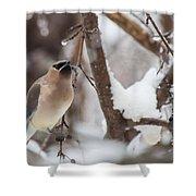 Cedar Waxwing In Winter Shower Curtain