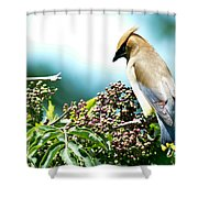 Cedar Waxwing Pose Shower Curtain