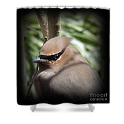 Cedar Waxwing Profile Shower Curtain