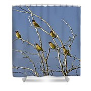 Cedar Waxwings Shower Curtain