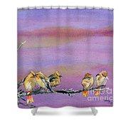 Bohemian Waxwings Birds Shower Curtain