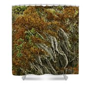 Cedars In The Fall Shower Curtain