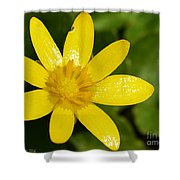Celandine Shower Curtain