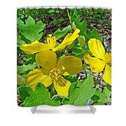 Celandine Poppy Or Wood Poppy - Stylophorum Diphyllum Shower Curtain