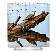 Happy Family Of Turtles Shower Curtain