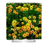 Celebration Of Yellows And Oranges Study 3 Shower Curtain