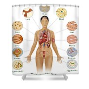 Cells Of The Body Shower Curtain