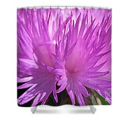 Centaurea From The Sweet Sultan Mix Shower Curtain