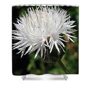 Centaurea Named The Bride Shower Curtain