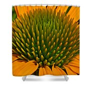 Center  Of Cone Flower Shower Curtain