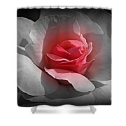 Centered Pink Shower Curtain
