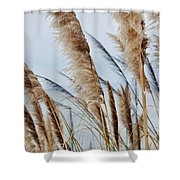 Central Coast Pampas Grass II Shower Curtain