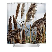 Central Coast Pampas Grass Shower Curtain