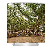 Central Court - Banyan Tree Park In Maui. Shower Curtain