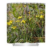 Central Florida Wildflowers Shower Curtain