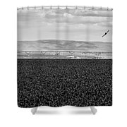 Central Washington, Usa. A Crop Duster Shower Curtain