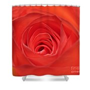 Centre Of A Rose Shower Curtain