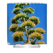 Century Plant 9 Shower Curtain