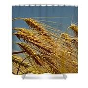 Cereals Shower Curtain