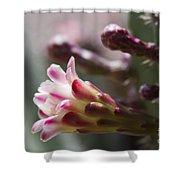 Cereus Hexagonus Pink Shower Curtain