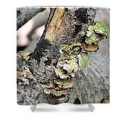 Violet-toothed Polypore Shower Curtain