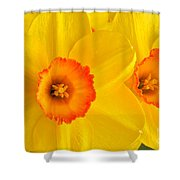 Ceylon Daffodils Shower Curtain