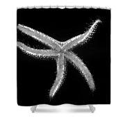 Dancing Starfish Shower Curtain
