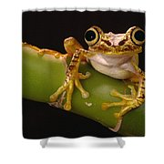 Chachi Tree Frog Ecuador Shower Curtain
