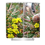 Chafer Beetle On Medusa Succulent In 3d Stereo Shower Curtain