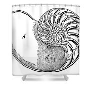 Chambered Nautilus Shower Curtain