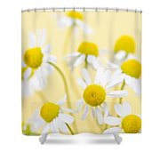 Chamomile Flowers Close Up Shower Curtain