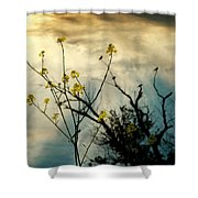 Changing Sky Shower Curtain