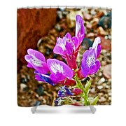 Chaparral Pea In Painted Desert Of Petrified Forest National Park-arizona  Shower Curtain